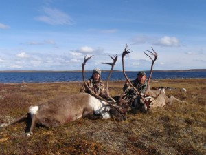 Central Barren Ground Caribou 2010 039